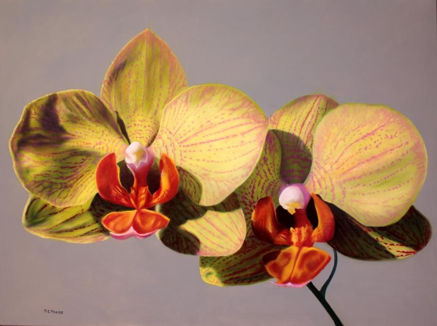 yellow moth orchid art