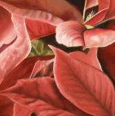 poinsettia plant painting
