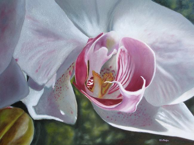 phalaenopsis orchid, orchid pictures,orchid flower, flower art