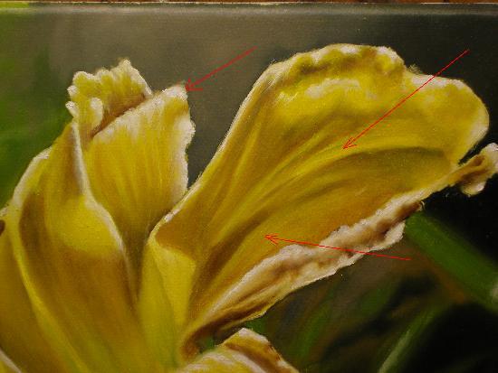 daylily demonstration