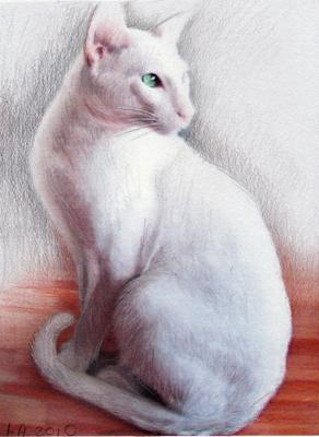 Cat Art, Apollo White Oriental Male Cat