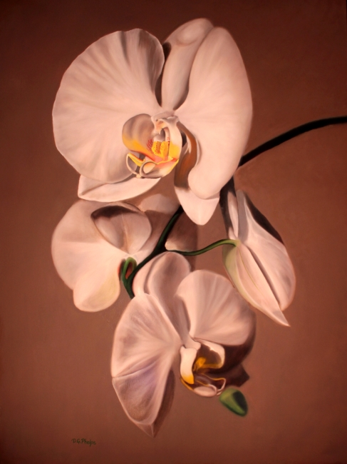 white moth orchid art