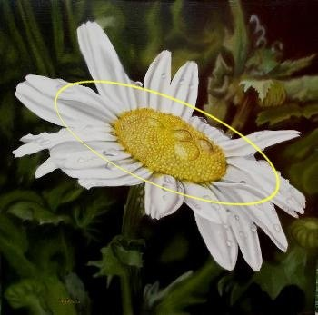 daisy painting, how to paint daisies