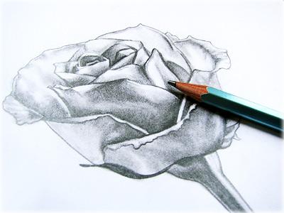 rose drawing using grid