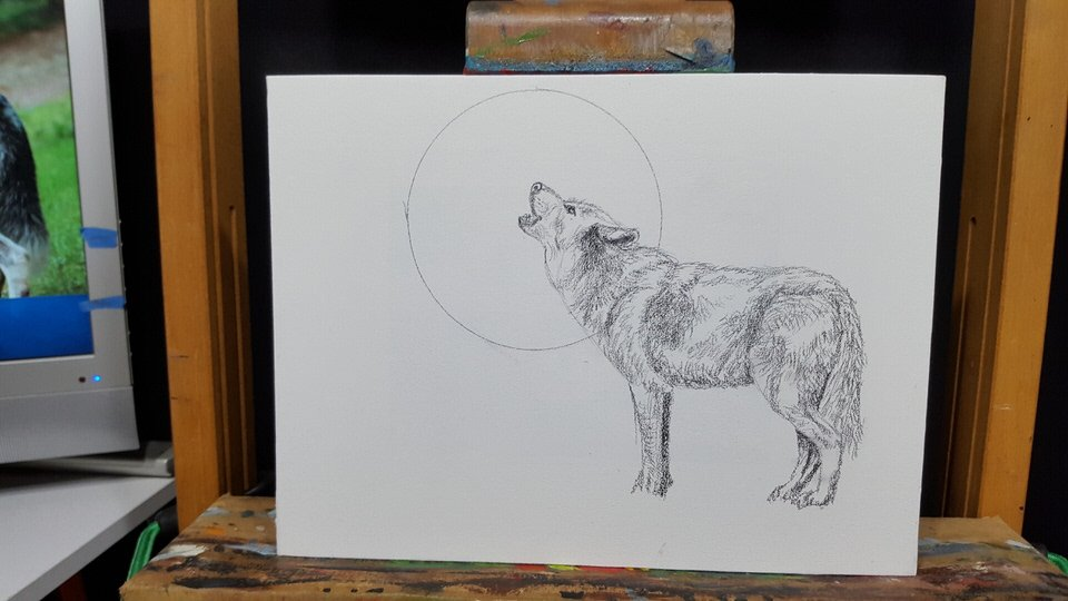 Wolf drawing some details added to my moon and i think im about ready to apply a fixative to the wolf drawing to keep it from being smeared ccuart Gallery