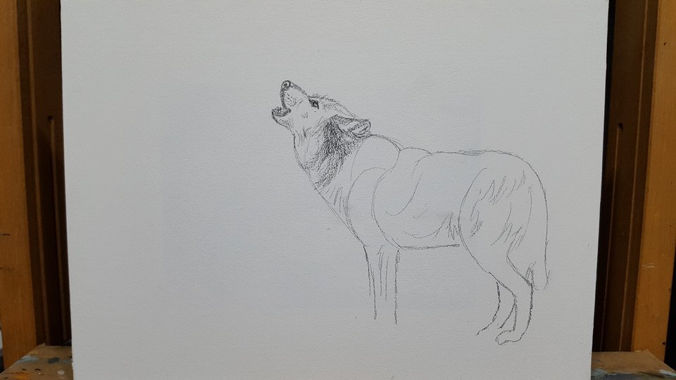 A Howling Wolf Drawing An Easy Step By Step Demonstration