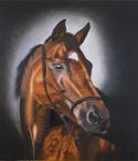 Horse Portrait, Karakum