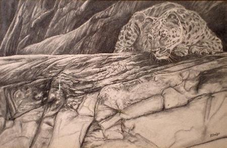 wild life pencil drawing