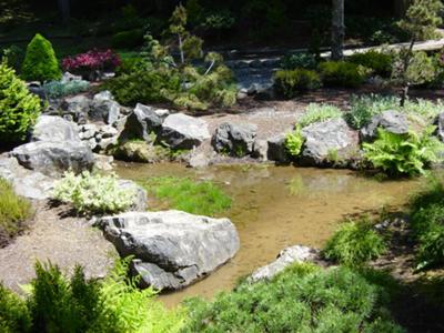 landscape pond