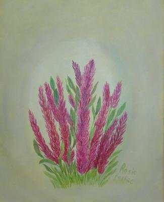 Mother's Day Celosia