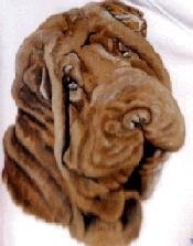 How can you not love me! Wrinkles