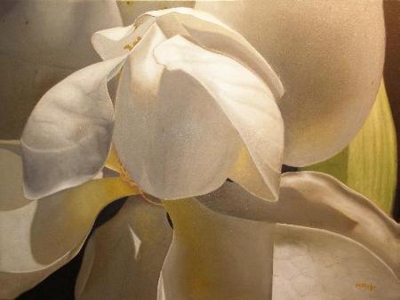 magnolia flower, southern magnolia