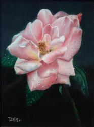 pink rose blossom painting
