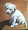 Fynn 2009 at 7 weeks old Oil painting portrait of rescue dog
