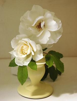 White Rose Picture, single white rose vase