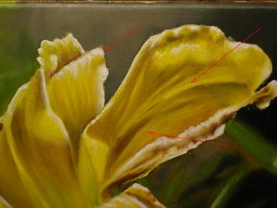 alla prima oil painting of a yellow lily