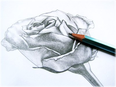 rose drawing using grid