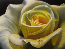 yellow rose zoom in