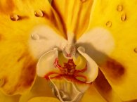 orchid painting close up view